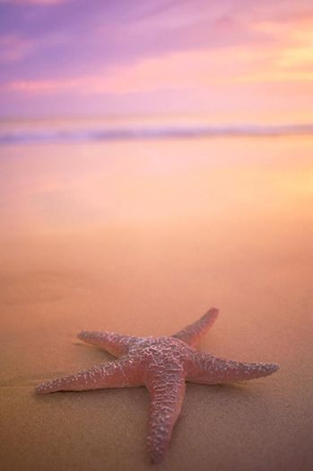 star_fish_beach4